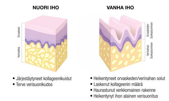 VANHENEVA IHO